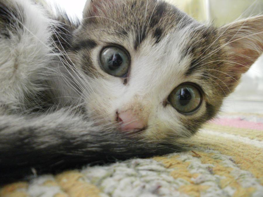 Kitten's eyes by Yuleto
