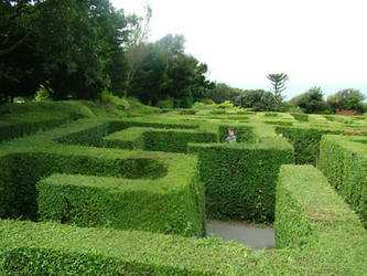 maze stock1
