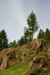 Enchanted Hill 3