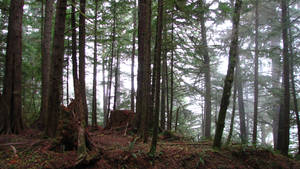 Ecola Forest 3
