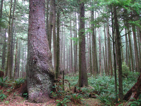 Ecola Forest 4