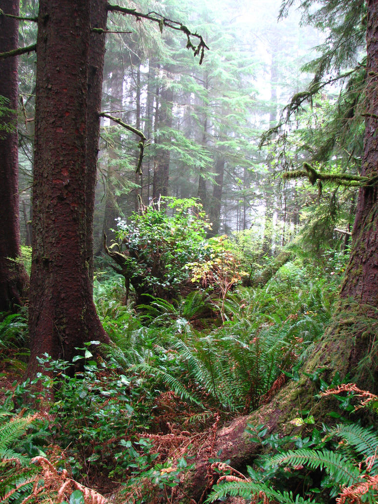 Ecola Forest 5 by FoxStox