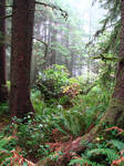 Ecola Forest 5