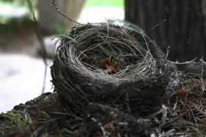Bird's Nest by FoxStox