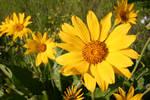 Sunny Flower Power