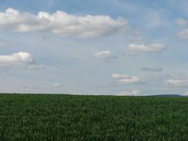 Green Grass, Cloudy Sky by FoxStox