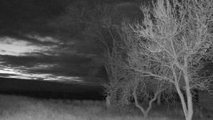 Spooky Night I