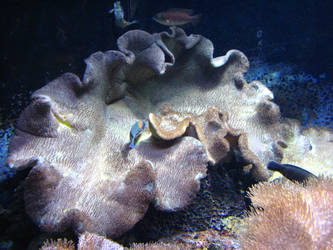 Ocean Coral 1