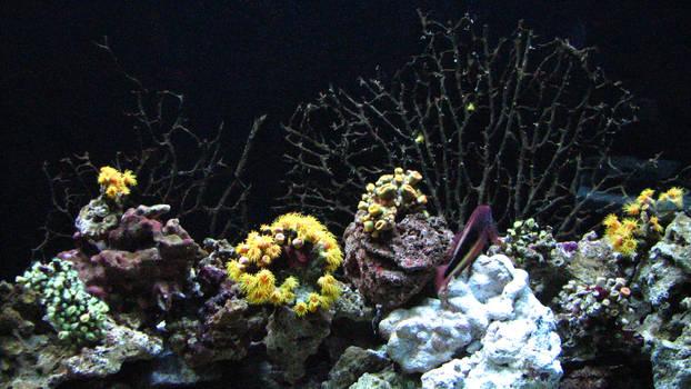Ocean Coral Reef 2