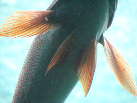 Fish Fins 2