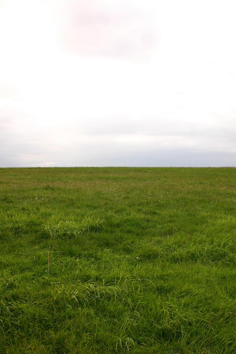 Grassy Field by FoxStox