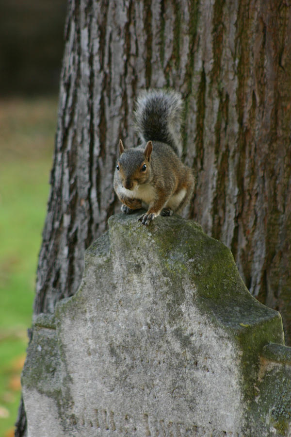squirrel chat sites You've just stumbled across a treasure trove of adult-themed games enjoy warning, this section is for viewers of 18 years of age, or older.