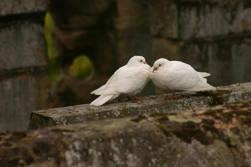Lovebirds by FoxStox