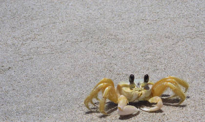 i got crabs by ferencstenton