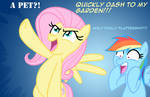 If Dash asks Fluttershy for a...