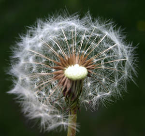 Did You Make a Wish?