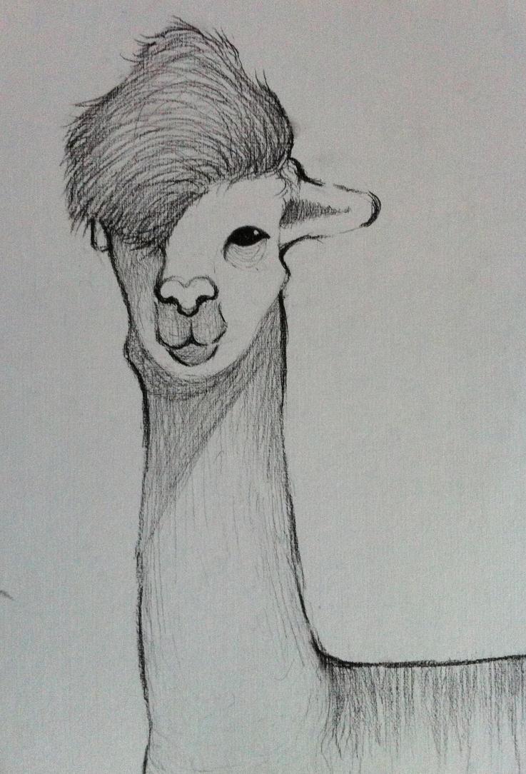 Llama drawing tumblr