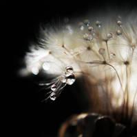fragility by Kara-a