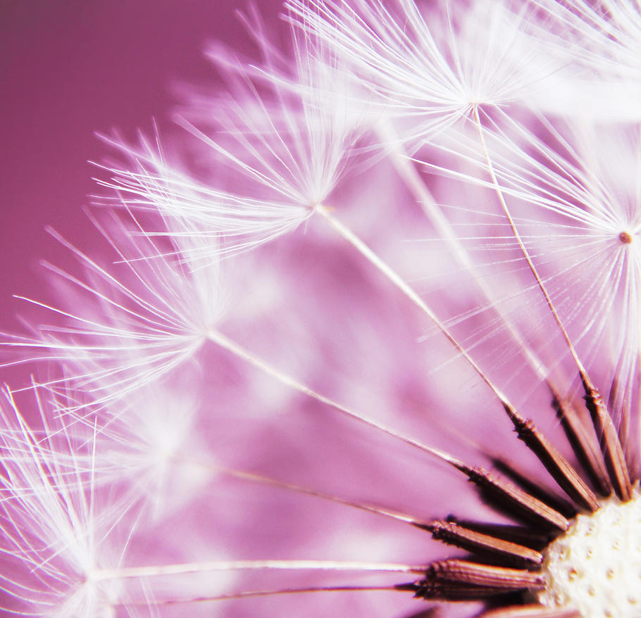 Make a wish by Kara-a