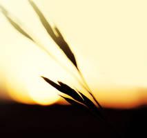 Sun goes down... by Kara-a