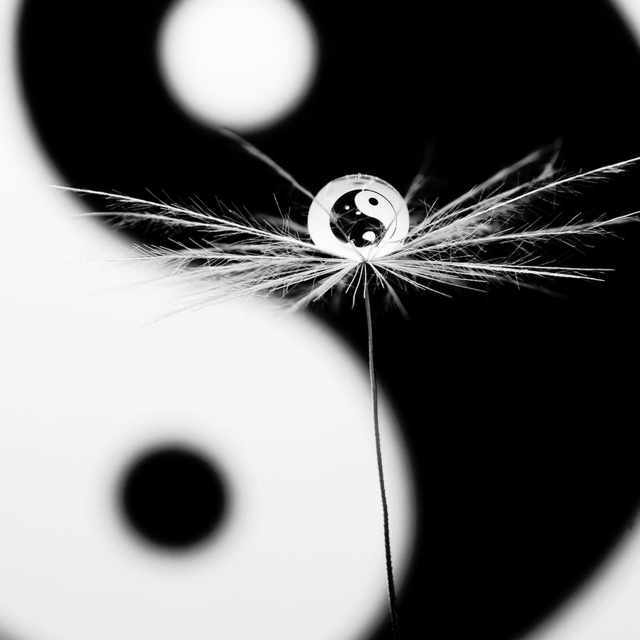 Yin and Yang by Kara-a