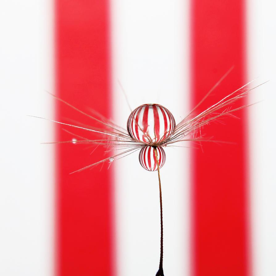 Balloons by Kara-a
