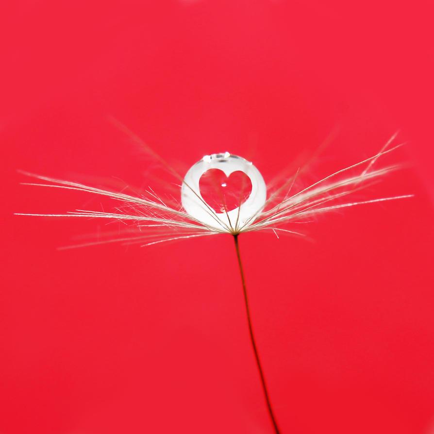 Love is everywhere by Kara-a