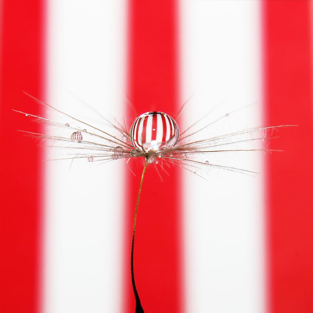 Balloons II. by Kara-a