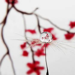 Blossom by Kara-a