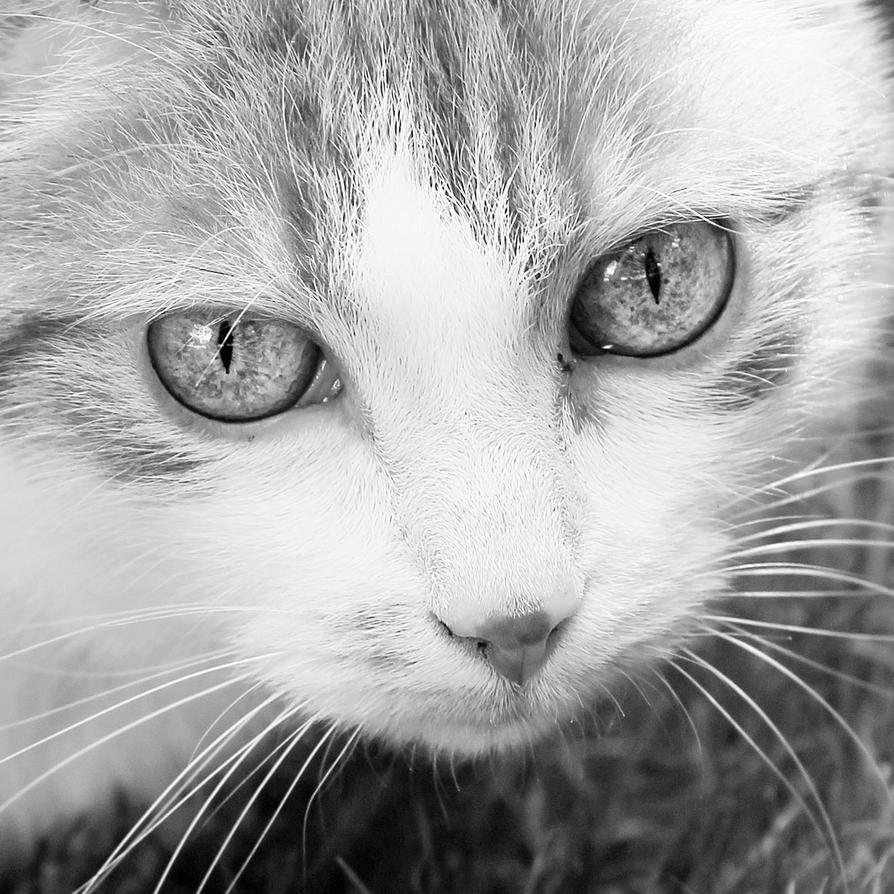 Demon Eyes by Kara-a