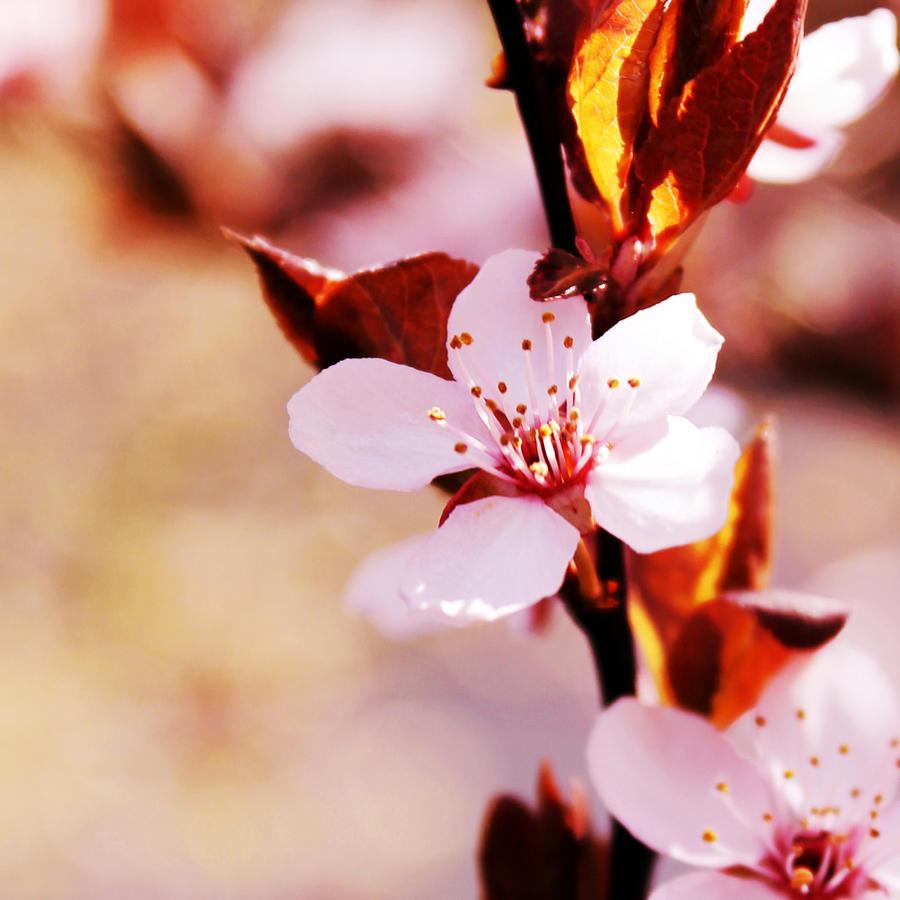 Welcome Spring II. by Kara-a