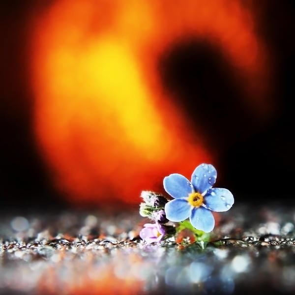 On Fire by Kara-a