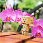 Danbo loves Orchids