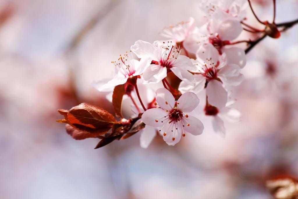 Spring by Kara-a