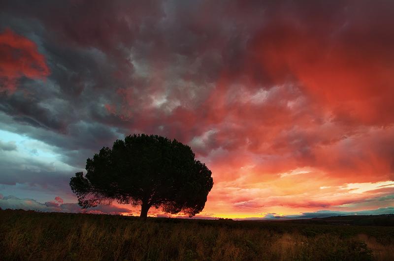 Bilo jednom jedno drvo The_forgotten_tree_by_prperold