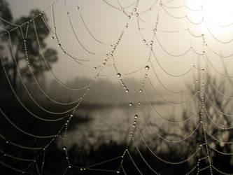 Spider's Morning by CanoeGuru