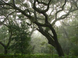 Whispering Oaks by CanoeGuru