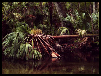 Fallen Palm by CanoeGuru