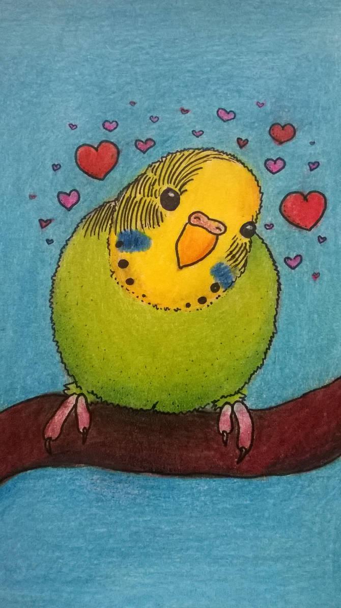 Parrot x3