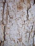 Bark cracked 7