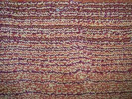 Carpet by jaqx-textures