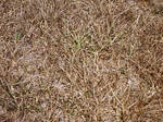 Grass dry 2 by jaqx-textures