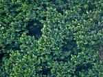 Plant leaves 1