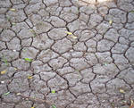 Cracked mud 3