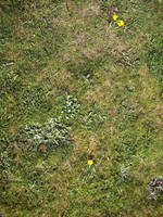 Grass 2 by jaqx-textures