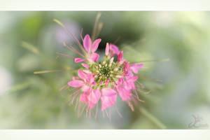 Bokeh de fleur by k-simir