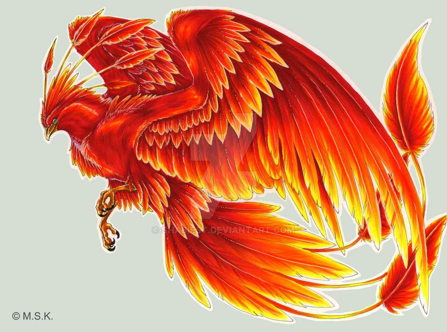 -C- Phoenix by Shadow-of-Destiny