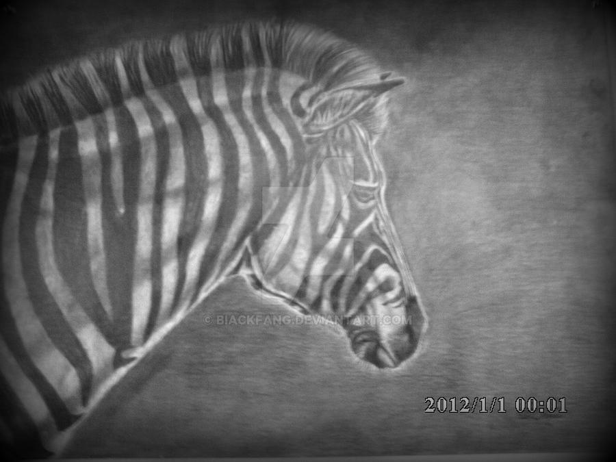 Ze Zebra by BIackFang