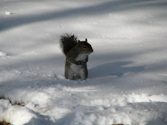 The Snow was A Bit Squirrely