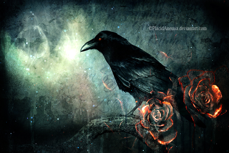 The Crow by PlacidAnemia